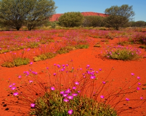 DESERT IN BLOOM - click for enlargements, information & purchasing