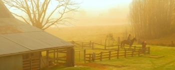 THE WOOLSHED - click for enlargements, information & purchasing