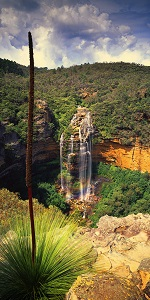 GRASSTREE & FALLS - click for enlargements, information & purchasing